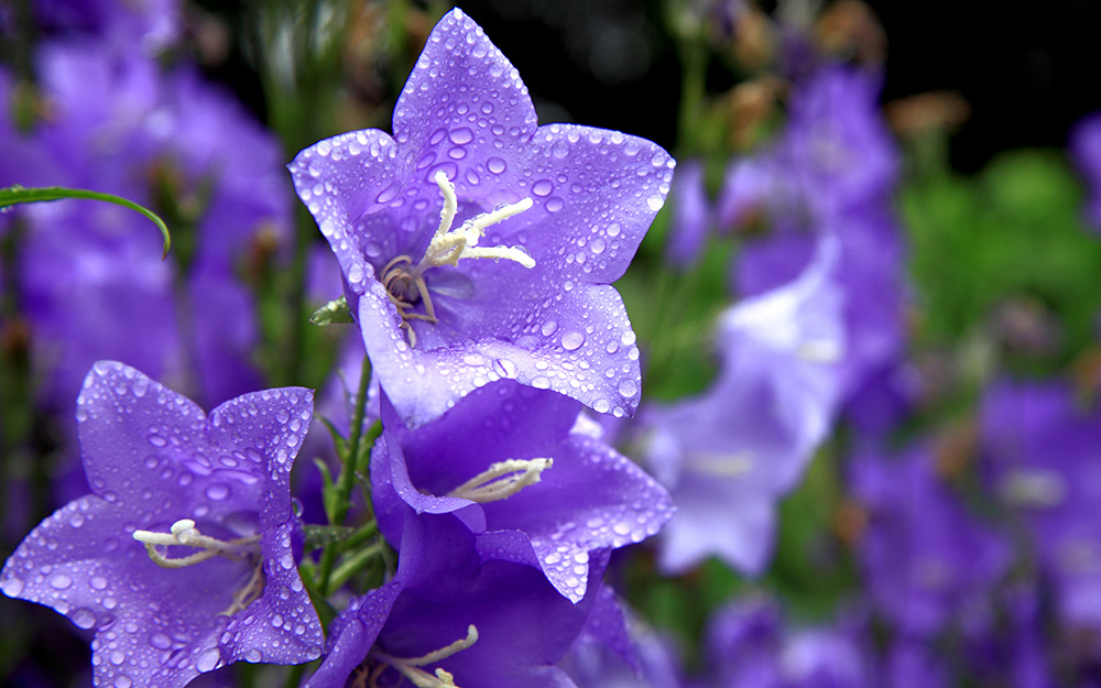 Edmonton Horticultural Society - EHS flower